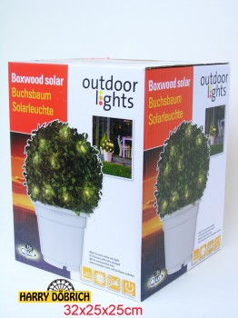 Buchsbaum Solar LED ca. 30cm