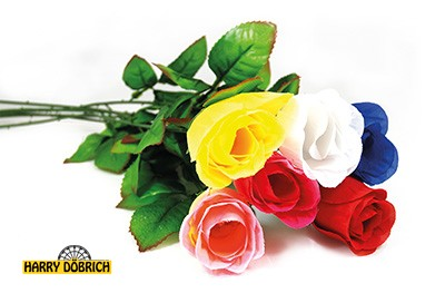 Baccara Rose 65cm 6-fach sortiert